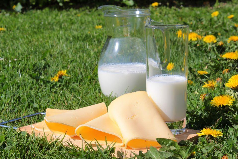 Milch und Käse stehen auf einer Wiese präsentiert