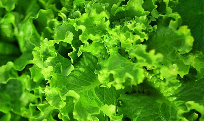 Grünes Blattgemüse enthält Eisen