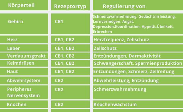 Wirkung von CBD im Körper