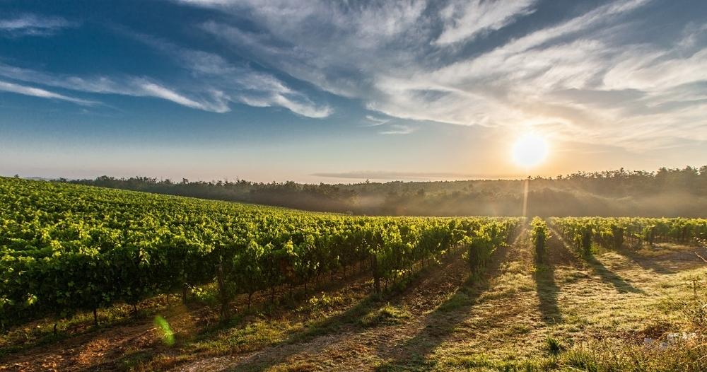 Online Weinversand Vergleich und Test