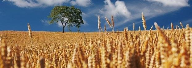 Regionale Lebensmittel sind umweltschonend