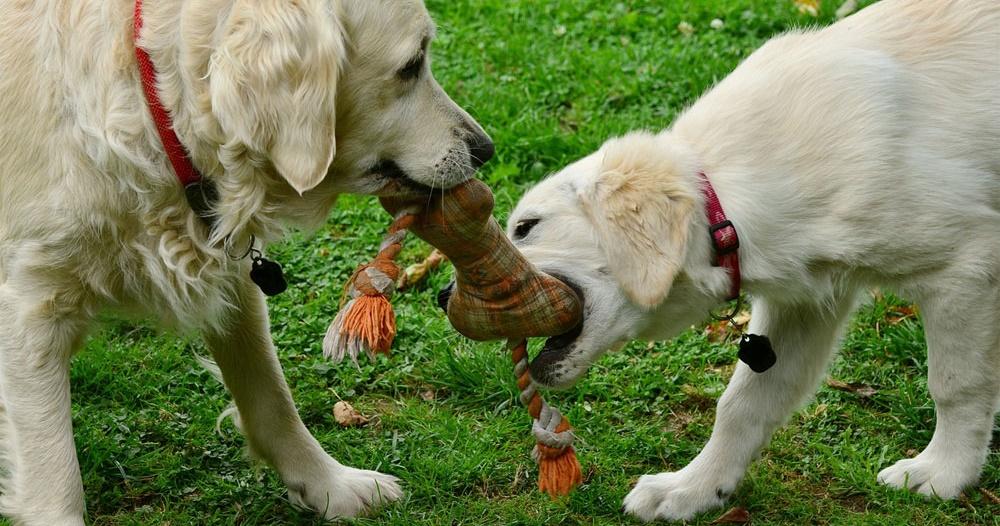 Tierfutter und Tierbedarf Vergleich Hunde