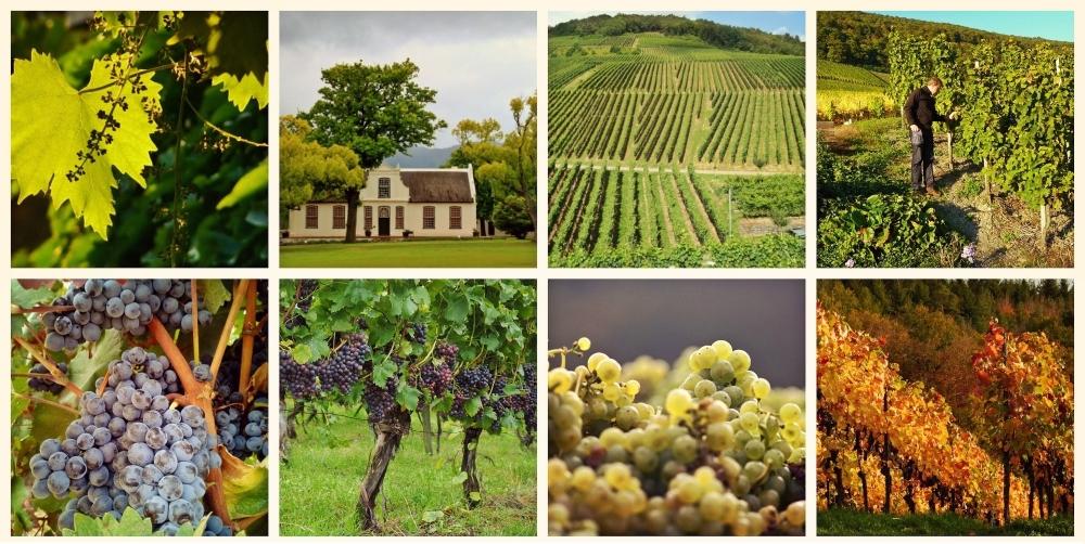 Weinversand Test Biowein online kaufen